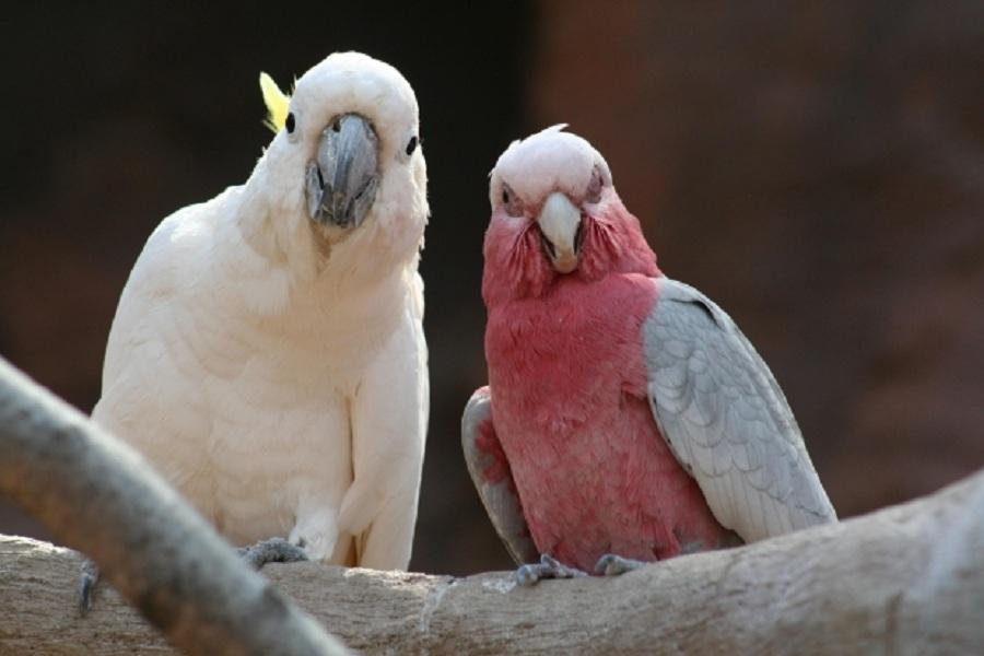 blog ptaki