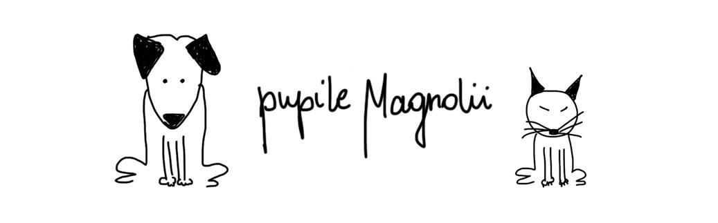 pupile_magnolii